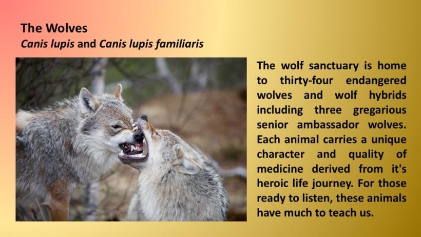 meet the wolves.jpg