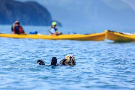 kayak-sea-otters